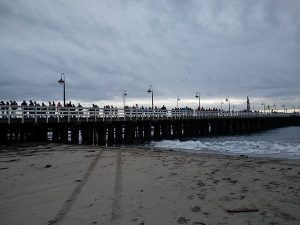 http://santacruz.patch.com/articles/will-swim-for-food-even-in-the-coldest-month-of-the-year#c