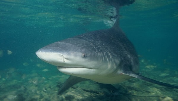 Heroic Soldiers Swim in Shark Infested Waters